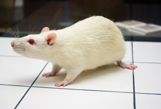 arguments in favour of animal testing